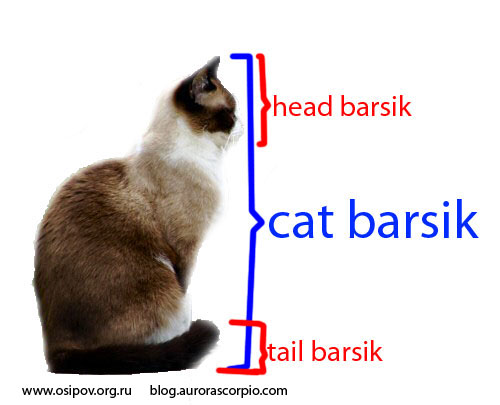 cat-head-tail.jpg